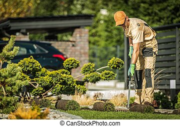 Autumn Garden Works. Caucasian Gardener in His 30s Installing New Natural Grass Turfs in Damaged Areas of the Lawn.