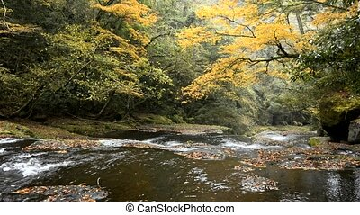 Autumn gentle river