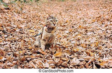 autumn., gevallen, de kat van de zitting, bladeren, weide, rood, droog