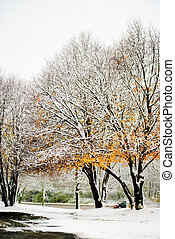 Autumn gold and winter white