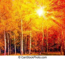 Autumn gold birch Background