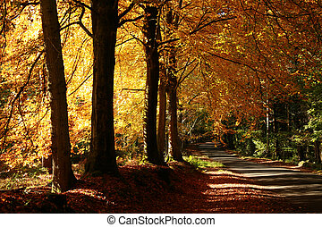 This shot was taken on a road that run next to longleat forest Wiltshire England