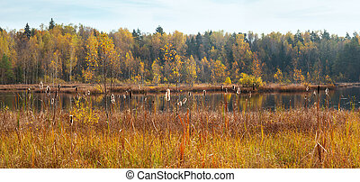 Autumn golden forest and reeds near lake
