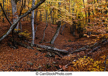 Autumn golden forest