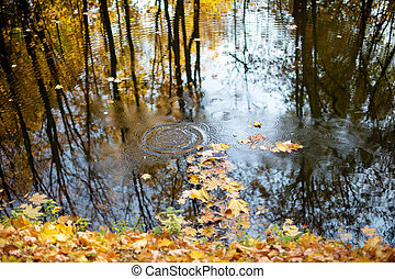 Autumn Golden forest nature, forest lake with water view. Nature of the Golden forest.