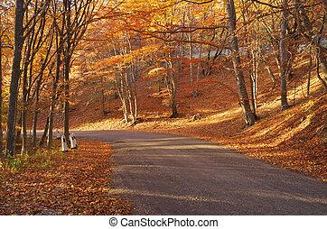Autumn golden forest.