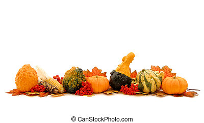 Autumn gourd bottom edge border over white