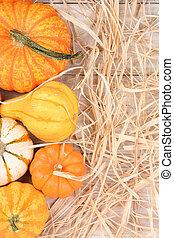 Autumn Gourd Still Life With Straw