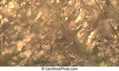 autumn grass at sunset 3