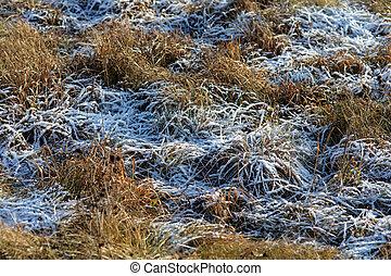 autumn grass in hoarfrost