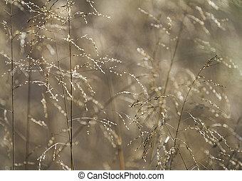 Autumn grasses background