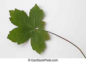 green dry leaf