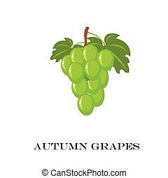 Autumn Green grapes. Vector illustration. White background.
