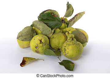 Autumn green quince. White background. - Autumn green quince...
