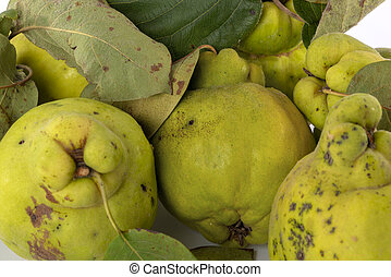 Autumn green quince. White background.