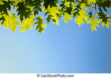 Autumn Green Yellow Leaves Outdoors Background Over Blue Sky
