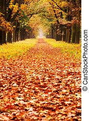 Autumn grounds
