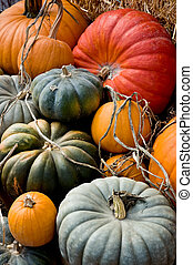Autumn Harvest - Arrangement of a variety of squash and...