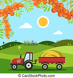 Autumn Harvest Field. Meadow with Tractors, Hills and Rowan Berries. Vector.
