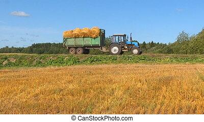 Autumn harvest of wheat. - On a warm sunny autumn day,...