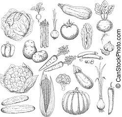 Autumn harvest sketch symbol with fresh vegetables -...