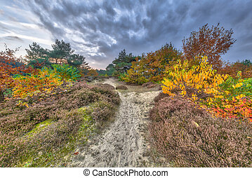 Autumn heathland landscape with colorful leaves on trees in...