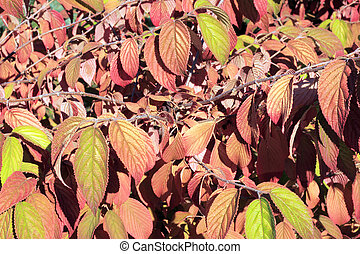 Autumn Hedge Leaves