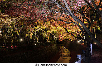 Autumn illumination of Japanese garden with maple trees along the canal at night in Kyoto, Japan