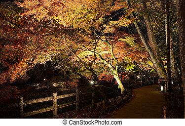 Autumn illumination of Japanese garden with maple trees at night in Kyoto, Japan