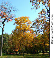 Autumn in a beautiful park