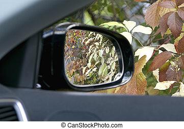 Autumn In A Car Window
