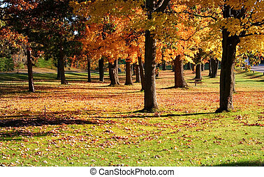Autumn In A Park
