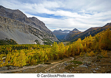Evening light on the yellow larches of the Valle? Etroite, italian-french Alps, 2000 m, near Bardonecchia