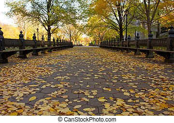 Autumn in Central Park New York