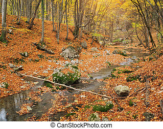 Autumn in forest and river flow.