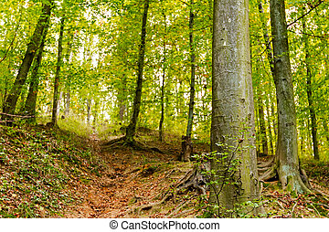 Autumn in forest - View trough forest in autumn time, leaves...