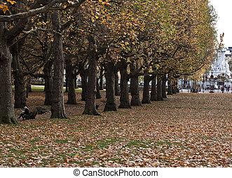 Autumn in London park.