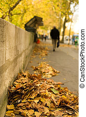 Autumn in Paris. Fallen leaves at the Seine embankment. Focus on leaf heap