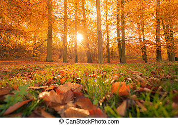 Autumn in park and forest