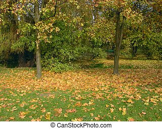Autumn In Park - Autumn in park