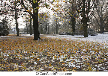 Autumn in park with snow