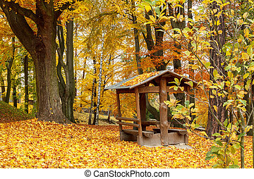 Autumn in park with yellow leaves on ground