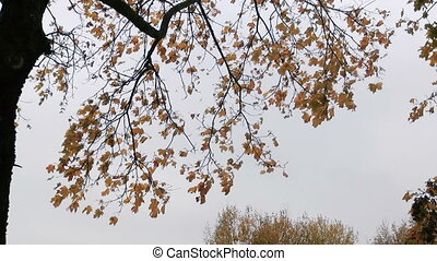 Branches of trees in autumn against the gray sky.