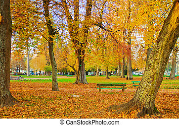 Autumn in the city park