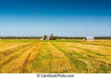 Autumn In The Fields 3
