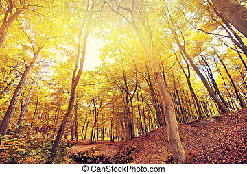 Autumn in the forest.
