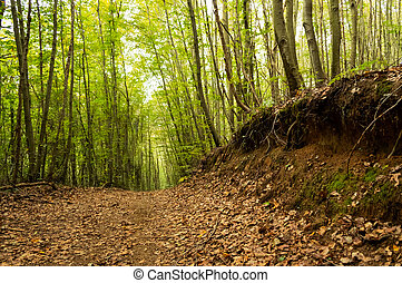 Autumn in the forest with brown leaves on the road - ...
