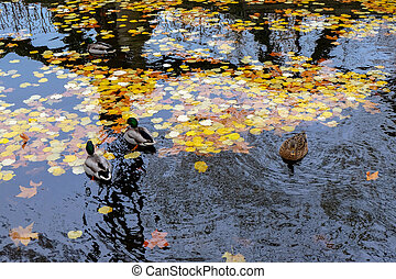 Autumn in the Luxembourg gardens in Paris. France
