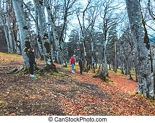 Autumn in the mountains forest. Children walking in the woods. Forest with bare trees, fallen orange autumn leaves.