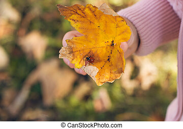 Autumn in the park; little girl holding a yellow leaf with a ladybug on it